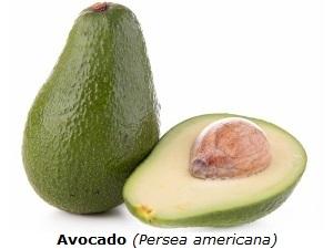 Avocado mit weißem Hintergrund
