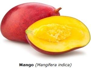 Mango mit weißem Hintergrund