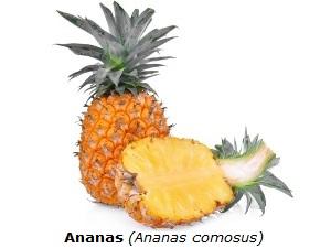 Ananas mit weißem Hintergrund